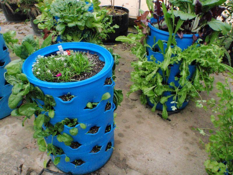 کاربرد بشکه در ایجاد باغچه