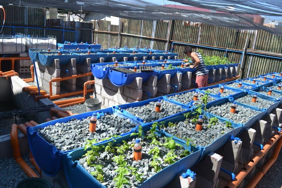 استفاده از بشکه در گلخانه برای کاشت گیاه