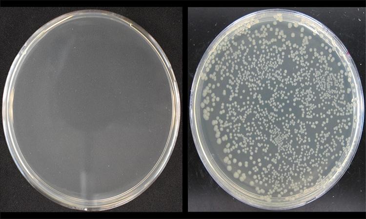 مقایسه رشد باکتری در مخازن آنتی باکتریال و معمولی